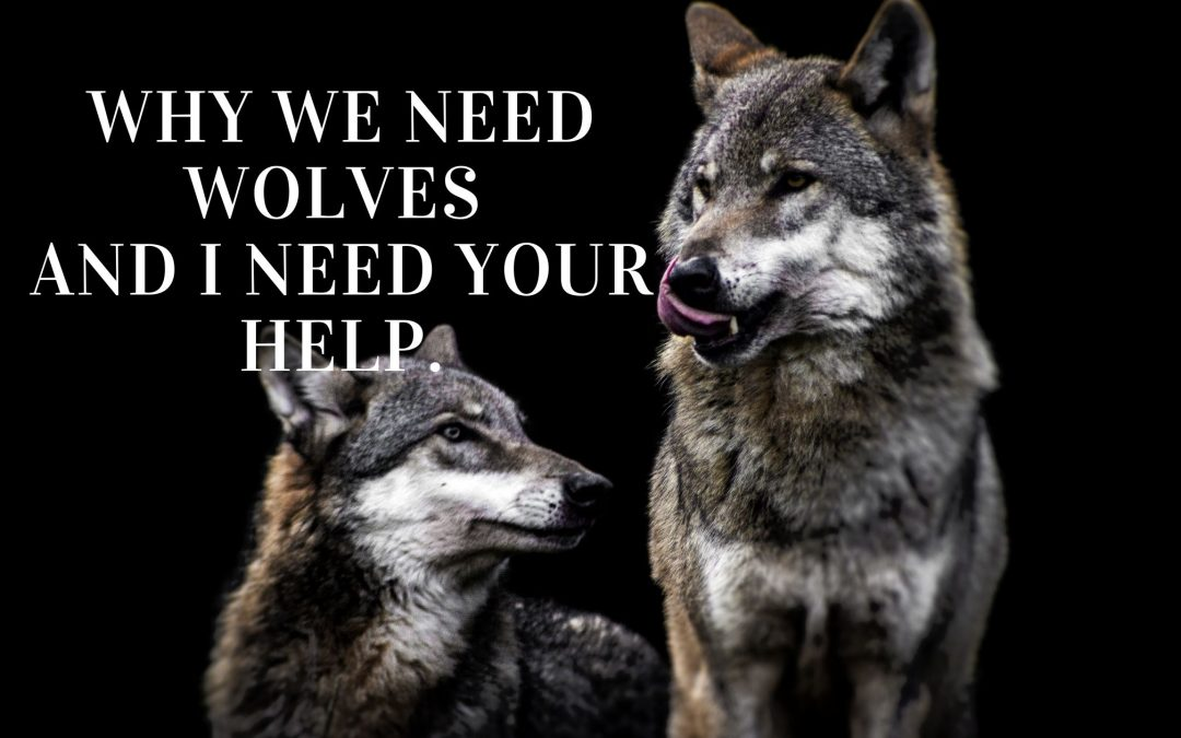 Why We Need Wolves and I Need Your Help